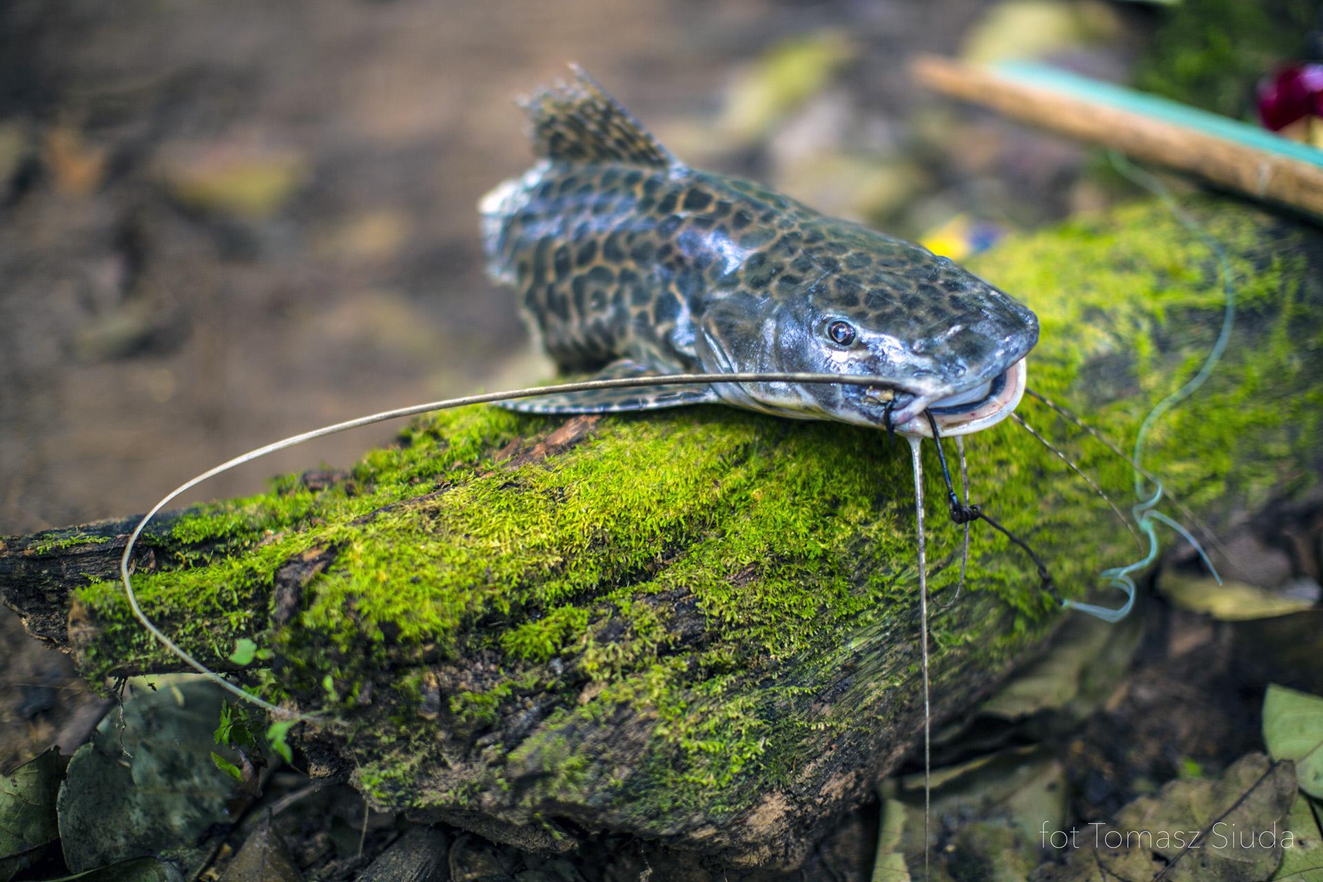dzika natura Amazonii